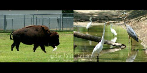 Animalsweb2